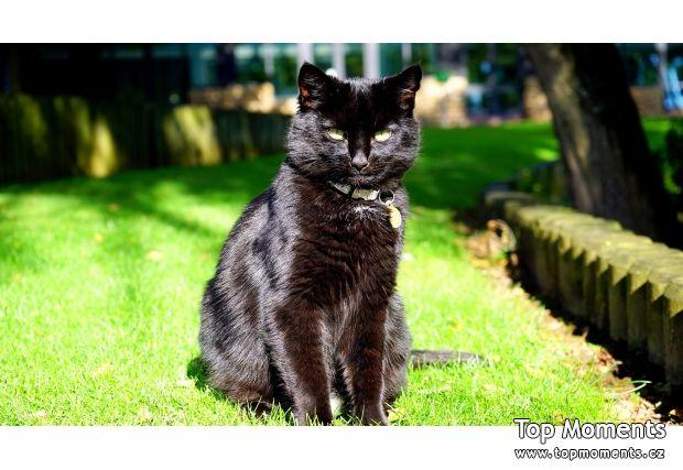 černá kočička horká kočička